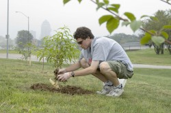 Photo of student planting a tree.