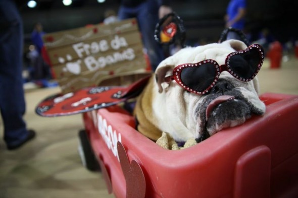 """Linus the LoveBug,"" owned by Rebecca Richardson of Washington, Ill., was named Best Dressed."