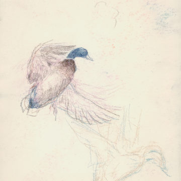 Drake University to host the 2020 Federal Migratory Bird Hunting and Conservation Stamp Art Contest