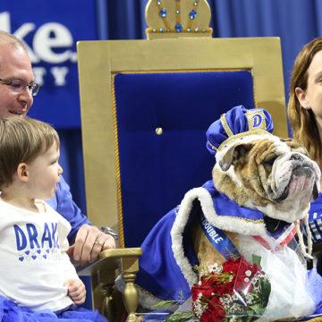 2020 Beautiful Bulldog Contest at Drake University Going Virtual